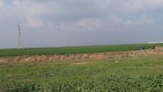 """انتعاش الزراعة """"الديمية"""" في اكبر ناحية حدودية مع إيران"""
