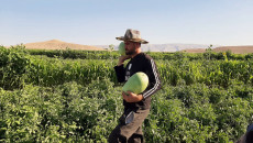 Security checkpoints give Shingal farmers hard time