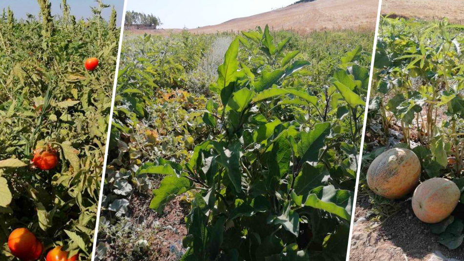 Kirkuk farmers unable to sell their summer produce due to imported mass-produced cheap fruit and vegetable