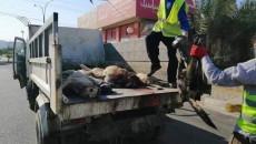 """فرق مختصة تنفذ حملة للتخلص من """"الكلاب"""" في الموصل"""