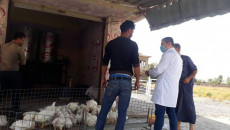 'Spread of swine flu kept secret in Mosul'
