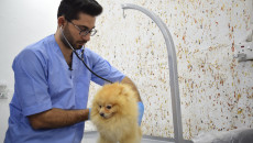 First pet care clinic opens in Mosul