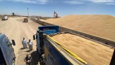 Buğdaylarında mercimek var<br>Bağdat, Kerkük çiftçilerinin ürünlerini almayı kabul etti