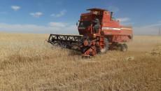 زراعة نينوى تعلن عن خطتها لأستلام الحنطة