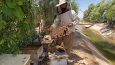 ليزان الكاكئي: تربية النحل عملية دقيقة