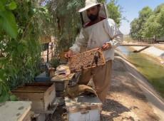 Lizan Kakai: Beekeeping is a delicate process