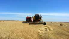 Iraqi ministry of trade to pay 261billion IQD to Kirkuk farmers