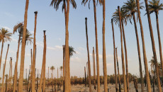 Palm tree farms turned into housing units