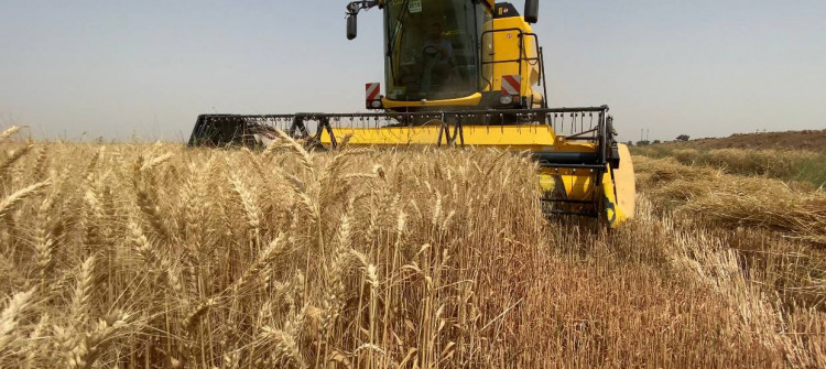 Harvest in May instead of June in fear of ISIS Fire