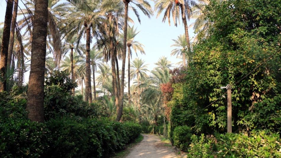 Sen Kobi orchard, a surviving memory of Jews' presence in Khanaqin