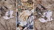 Ezidi family finds mass grave in their house after returning