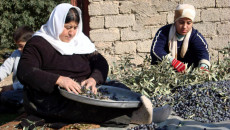 COVID-19 reduces demand for olives produced by minority communities in Bashiqa