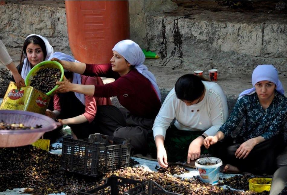 Laliş tapınağında zeytinyağı alma
