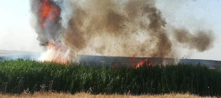 الحرائق تلتهم آلاف الدونمات من المحاصيل الزراعية في كركوك و نينوى