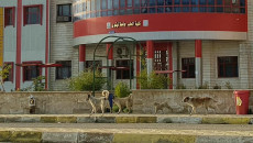 الكلاب السائبة.. إرهاب من نوع اخر يهدد الموصل