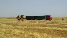 57 يوما على ازمة تسويق مزارعي نينوى لمحصول الحنطة
