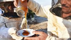 الوظيفة الأحلى في العراق: تربية النحل في سهول نينوى