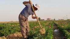 Kaka'i farmer becomes bankrupt thrice due to Daesh and Covid-19
